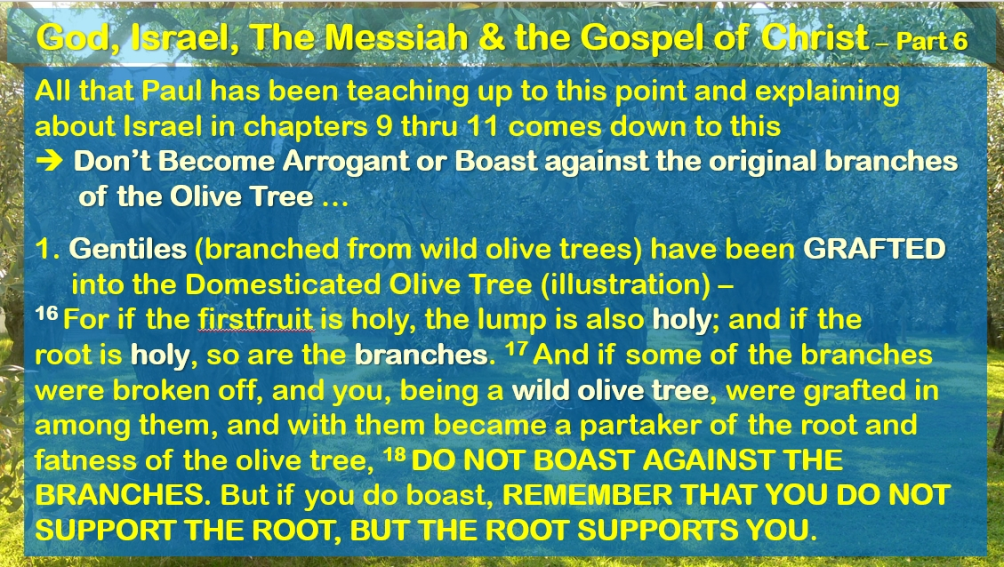 God, Israel, the Messiah, and the Gospel of Christ - part 6 - Romans 11:16-36